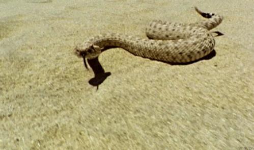 Overcoming fear of Snakes?-img_9984.jpg