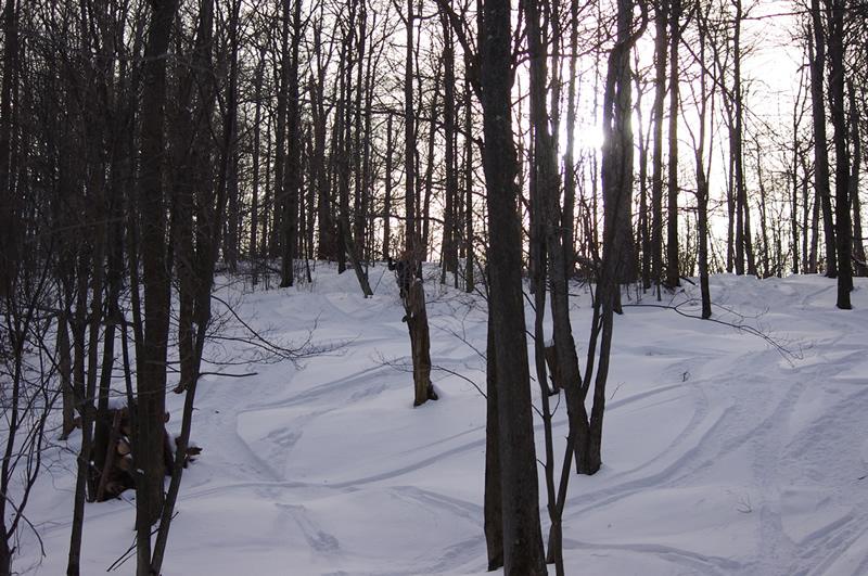 Sticky Snow-imgp0849.jpg