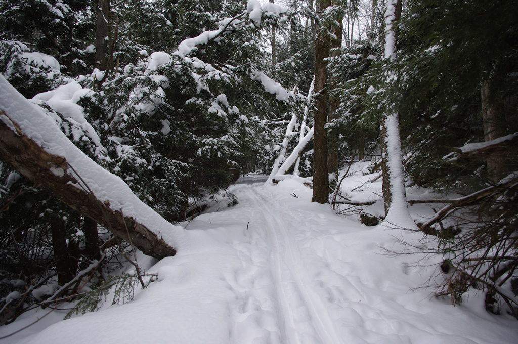 The Trails are Covered.....Post your snow..pics-imgp1821.jpg