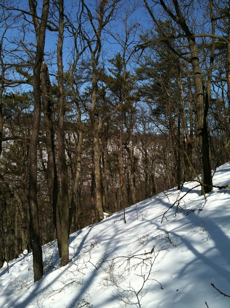 The Trails are Covered.....Post your snow..pics-iphone-pics-196.jpg