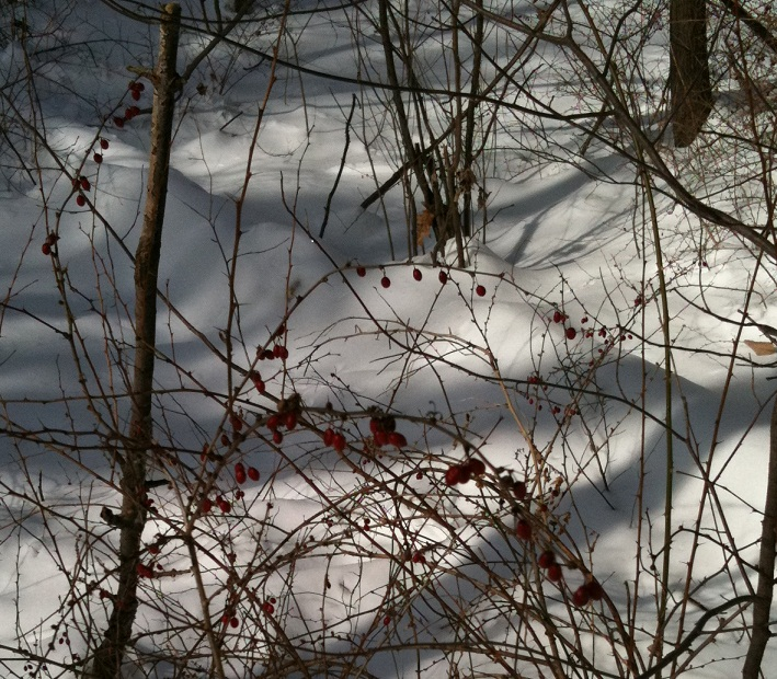 The Trails are Covered.....Post your snow..pics-iphone-pics-198.jpg
