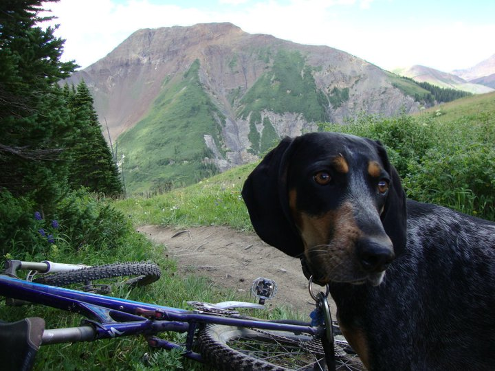 Dogs with Passion-irie-bike.jpg