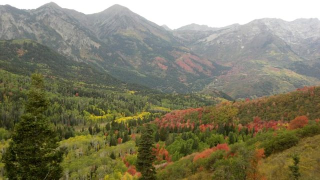 Fall Aspen Passion-doesnt-get-much-better-than-.jpg