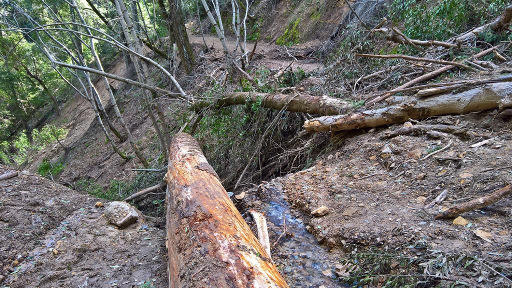 John Nicholas trail status-jack-devastation.jpg