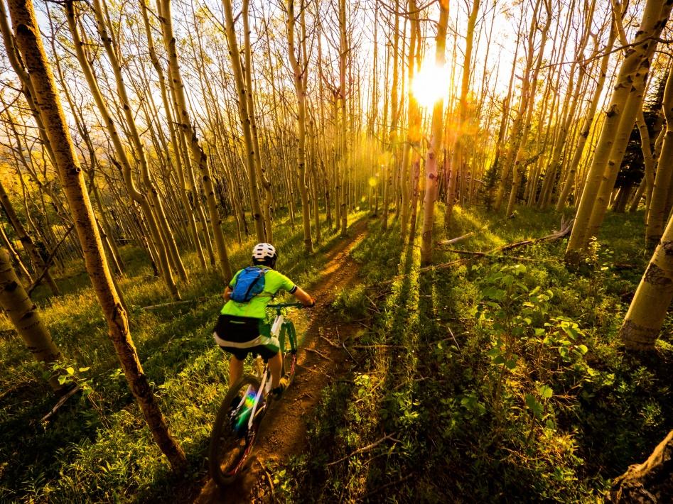 The NM Trail Pix Thread-jasonaspens.jpg