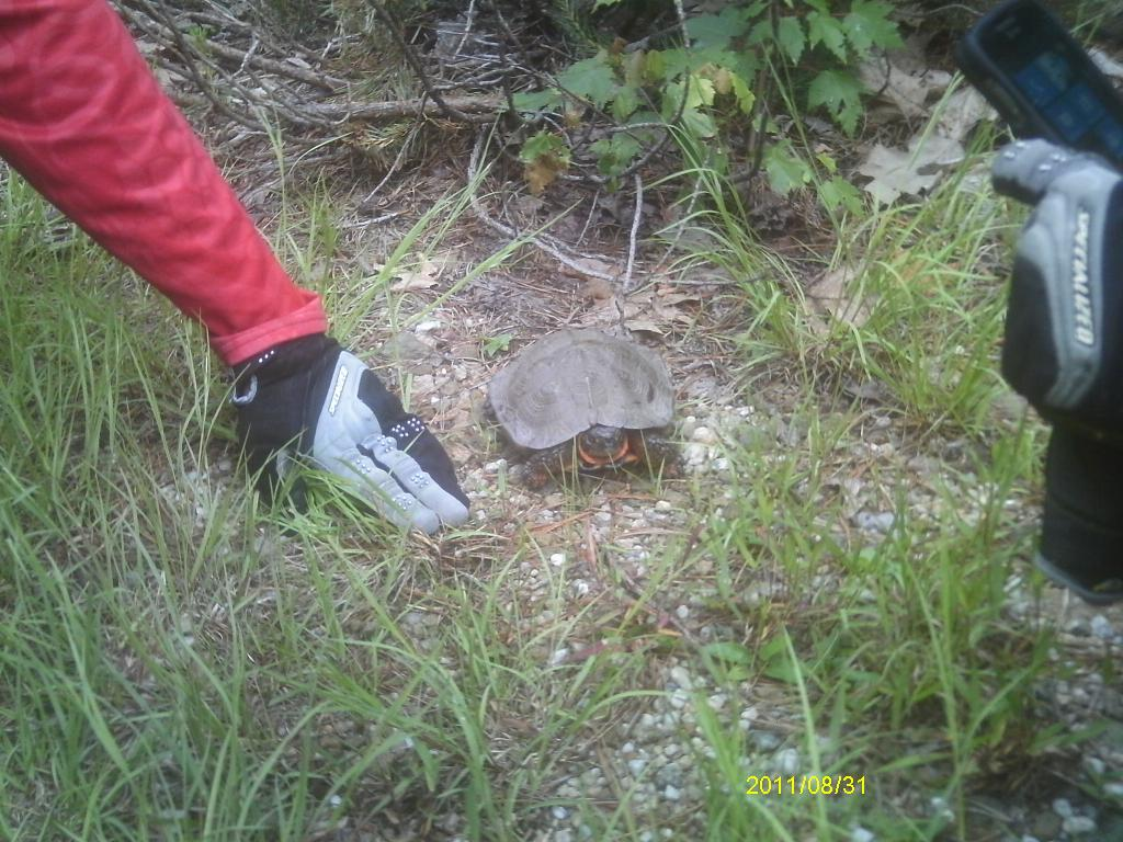 Wildlife you have seen on trail...post your pics...-jays-127.jpg
