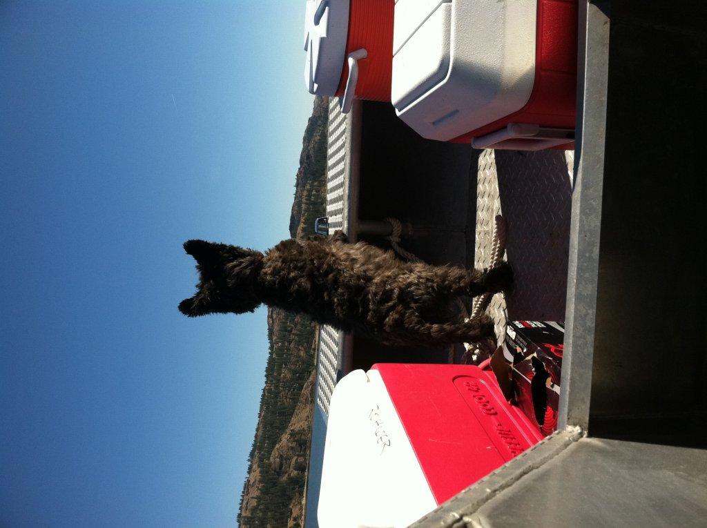 Single-wheel Trailer for a medium-sized dog?-jetboatscotty2012.jpg