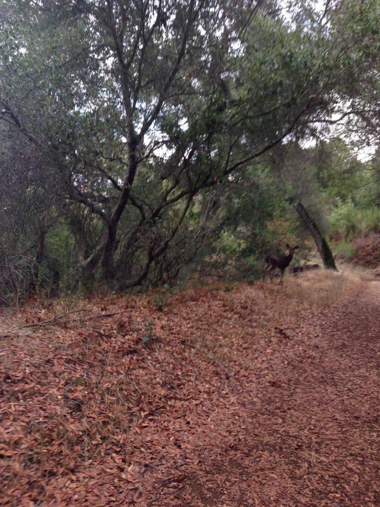 Bay Area Trail name origins-jonesdeer.jpg