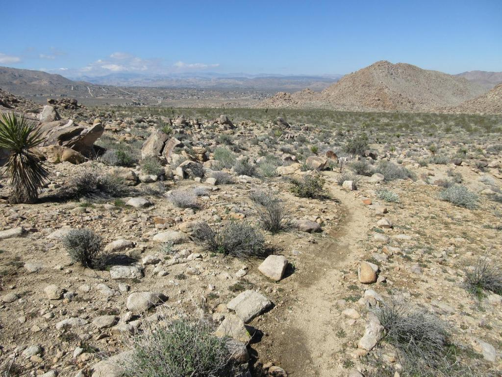 Weekday Ride Report February 27 - March 2-joshua-tree-palm-desert-feb-2017-017.jpg