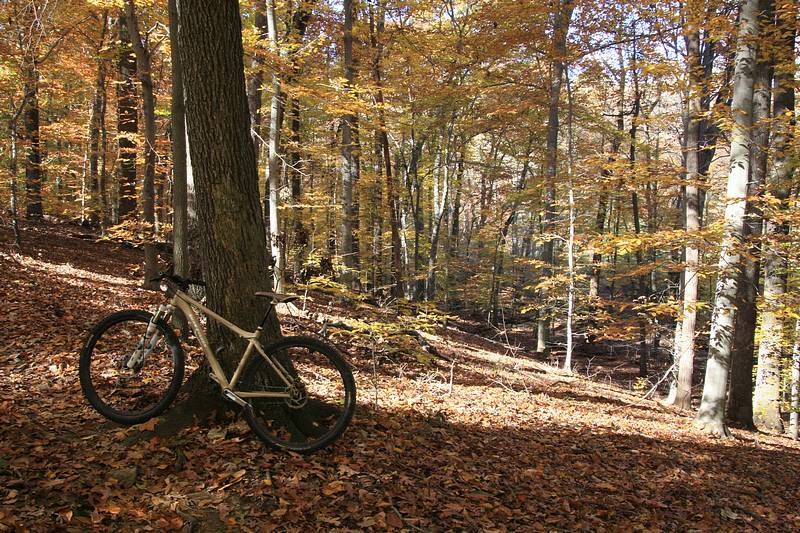 2011 Fall Colors (with Bike)-js800_img_5176.jpg