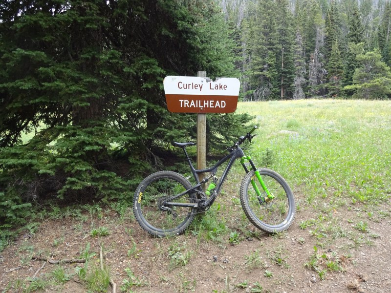 TR - 2017 Canada roadtrip with MT appetizer and chaser (x-post from the AZ forum)-july-25_curly3.jpg