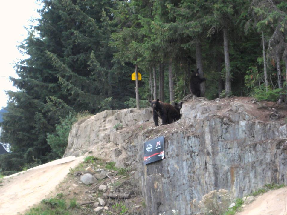 Bear on GLC drop