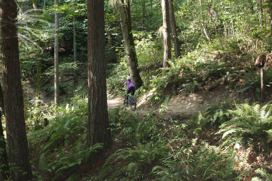 Trailcraft Pineridge 24 youth mtb review.-kaiainforestdown_ael.jpg
