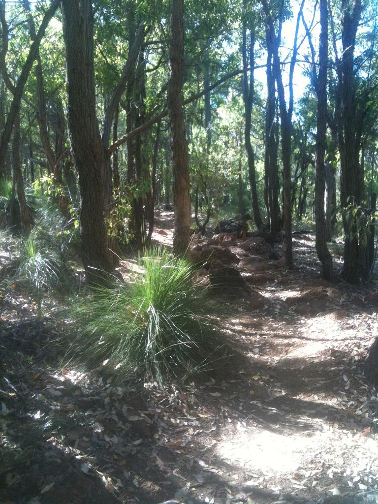 A morning in the Bush-kalamunda-2.jpg