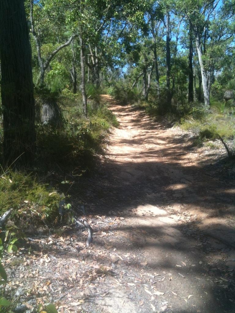 A morning in the Bush-kalamunda3.jpg
