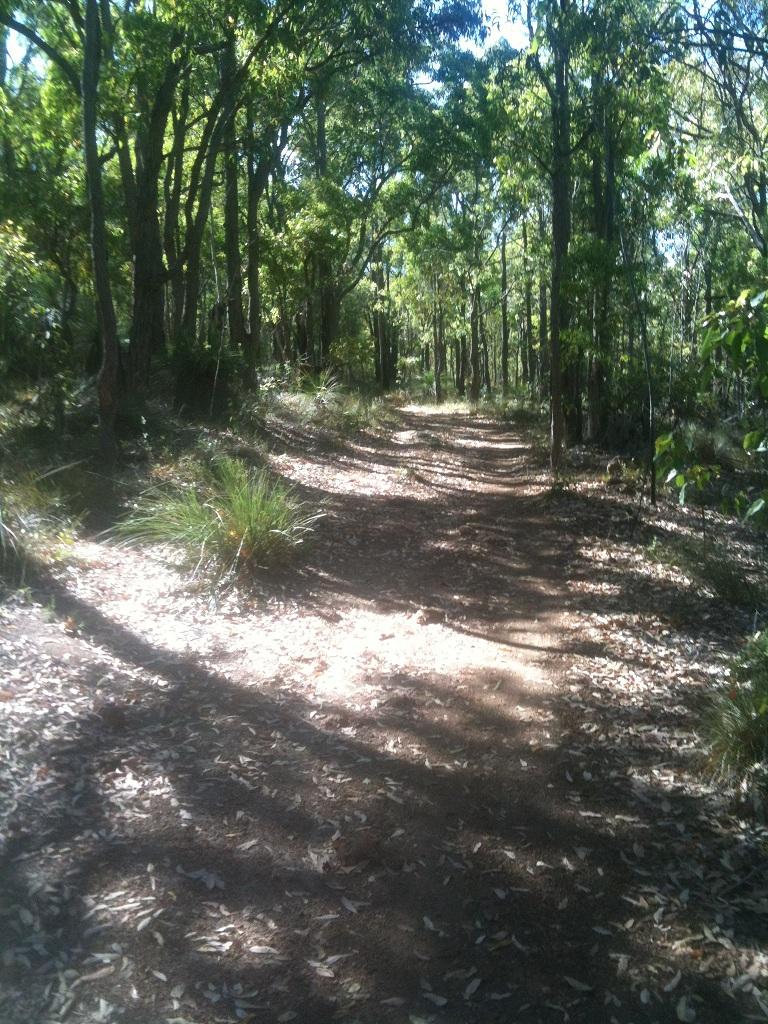 A morning in the Bush-kalamundra4.jpg