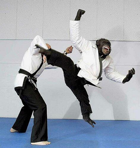 Name:  karate_monkey.jpg Views: 1827 Size:  74.2 KB