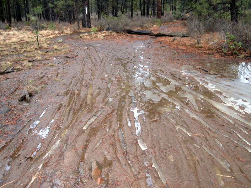 2014 - Bend Area Trail Conditions & Blow Down Thread-kgb.jpg