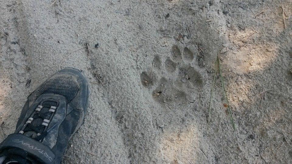 Upper Kittitas Co 2014- Rat Pack, Ros Ridge, Teanaway, etc-kitteh.jpg