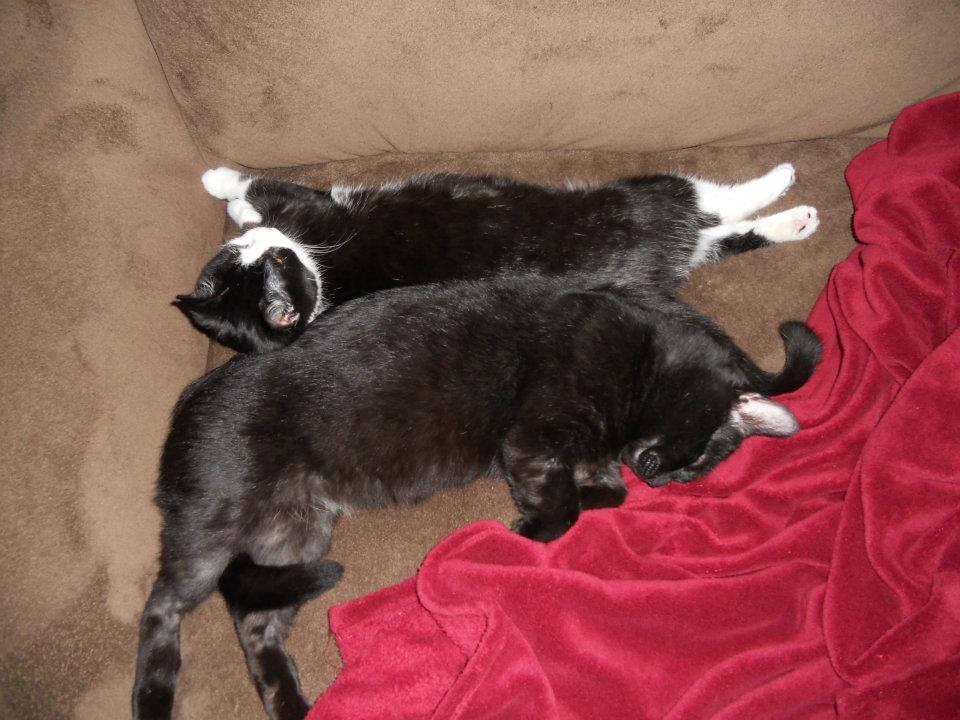Cat Passion (here kittie, kittie, my new best friend...) Post your cat photos.-kitties.jpg