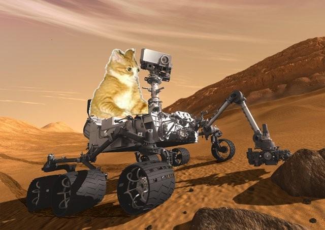 Mars Curiosity Lander LIVE-kitty_mars.jpg