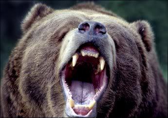 Name:  kodiak-bear1.jpg Views: 455 Size:  19.3 KB