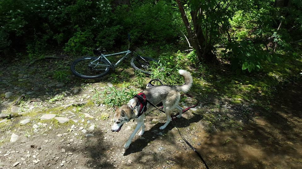 Dogs with Passion-kona-bike.jpg
