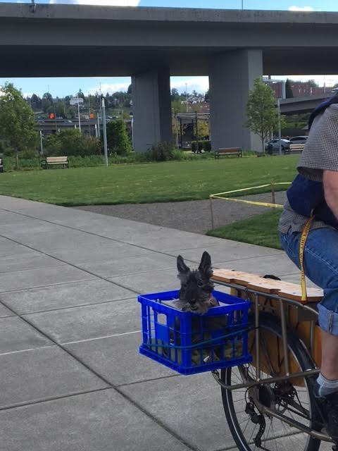 Post Pics of your Cargo Bike-konascotty5717.jpg