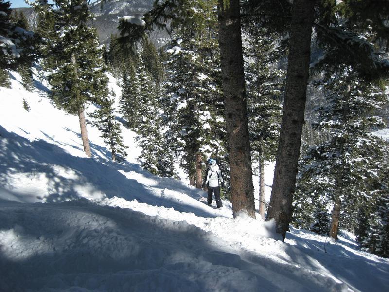 Ski or MTB?!?!  Tough Choices-kristinloreleitrees.jpg