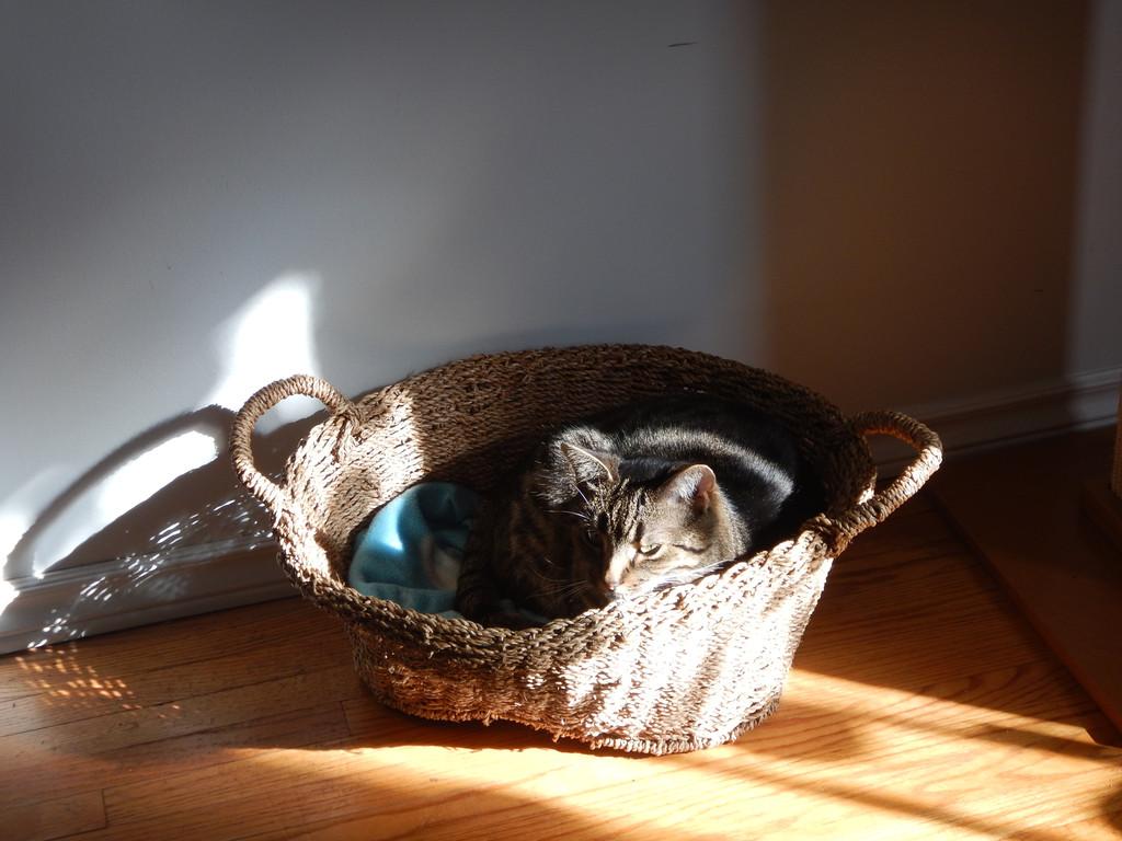 Cat Passion (here kittie, kittie, my new best friend...) Post your cat photos.-kt95ihc_zpsa1uxvzup.jpg