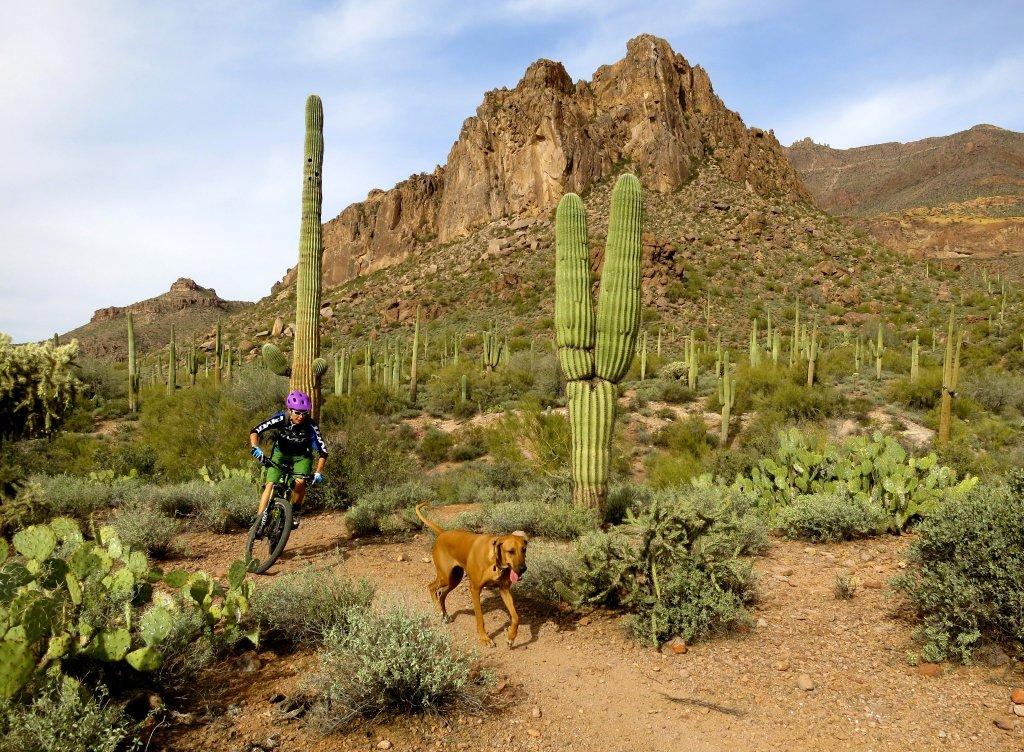Pivot and trail dog thread...-l-stell-gc.jpg