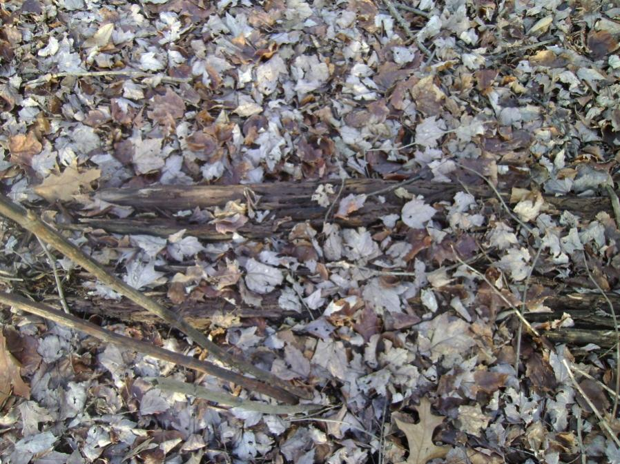 Old Coal-lackawanna-river-railbed-duryea-12-9-11-010_900x900.jpg