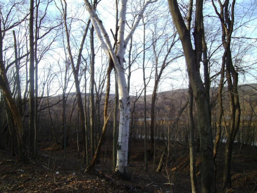 Old Coal-lackawanna-river-railbed-duryea-12-9-11-015_900x900.jpg