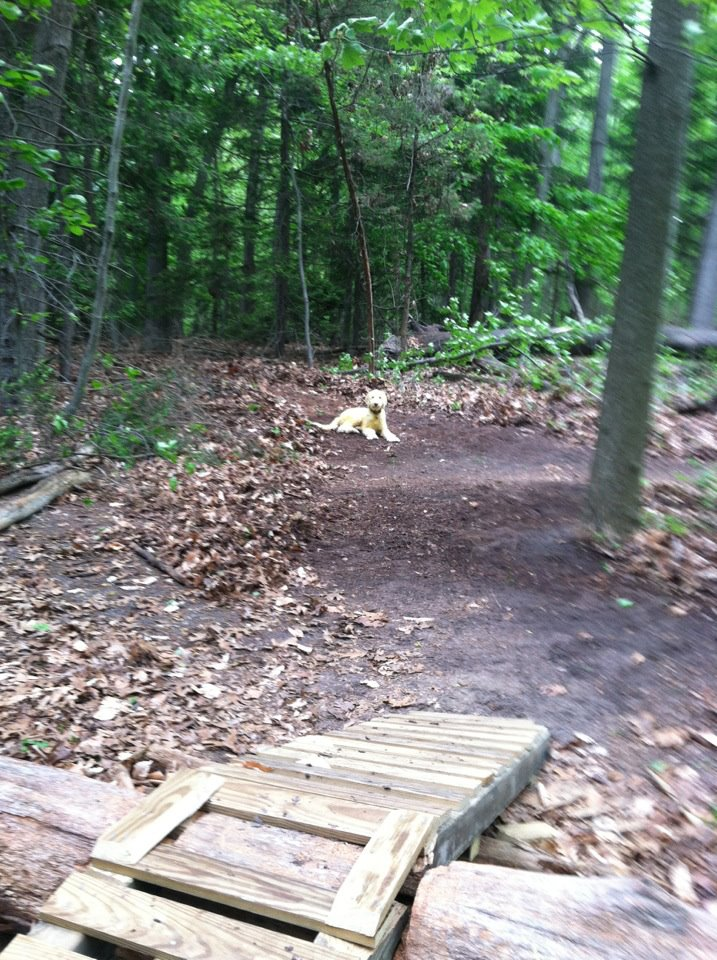 Log ramps: Good? Bad? And how best to build them?-ladder2.jpg