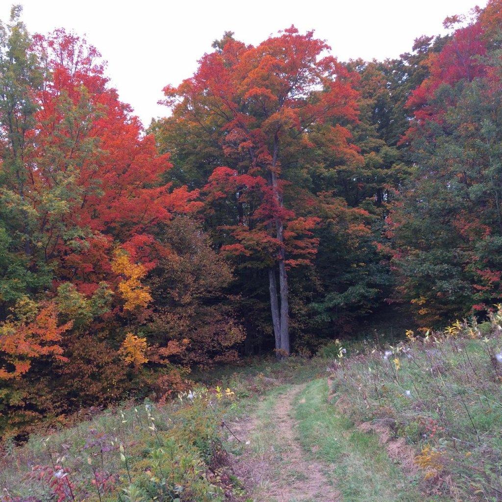 Ascutney is AMAZING!!!-last-mile-foliage.jpg