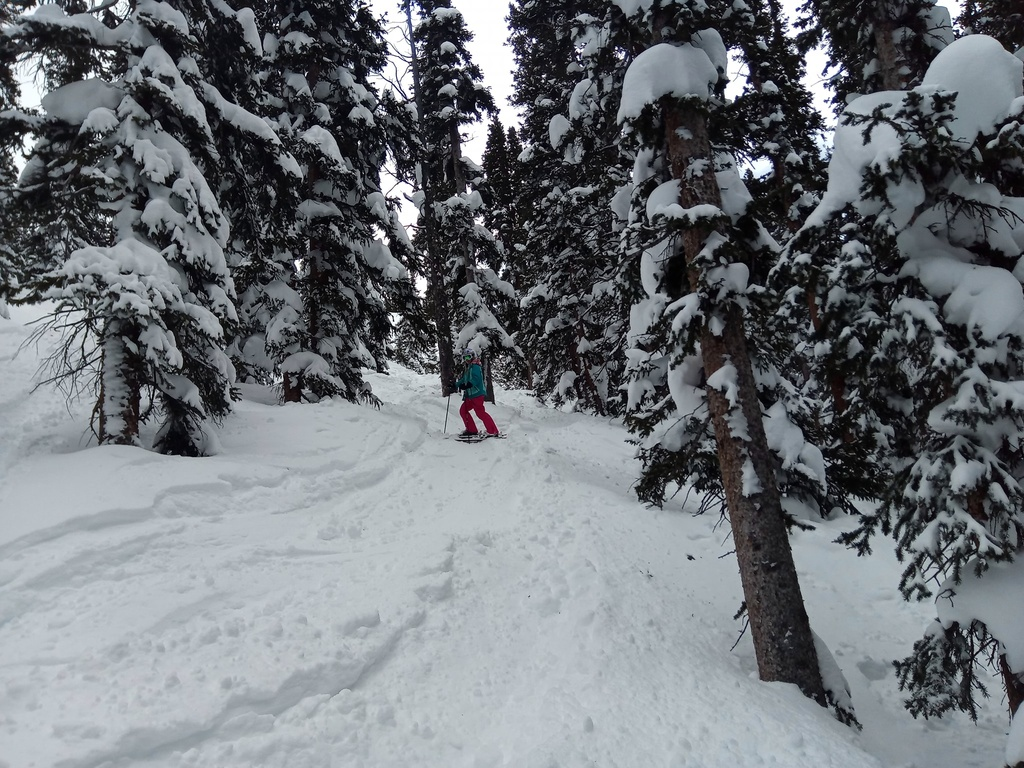 Do you like to get HIGH, man? (post your high country riding photos)-laurentreepow.jpg