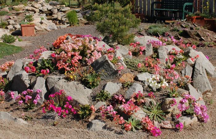 Dyke 8/ Browns Ravine Rock Garden Feud-lewisiamound.jpg