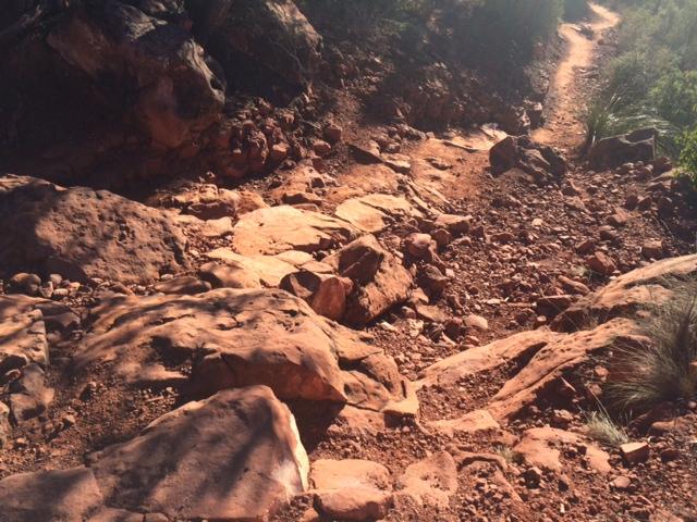 Riding the NEW Little Horse Trail Improvement-lhorse1.jpg