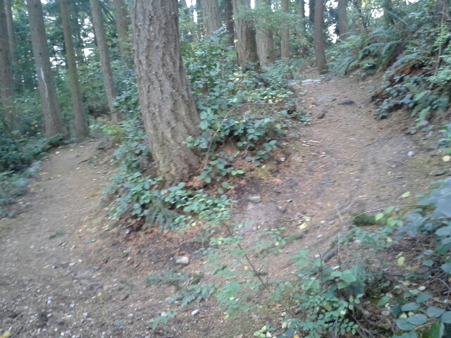 Trail Pics-little.jpg