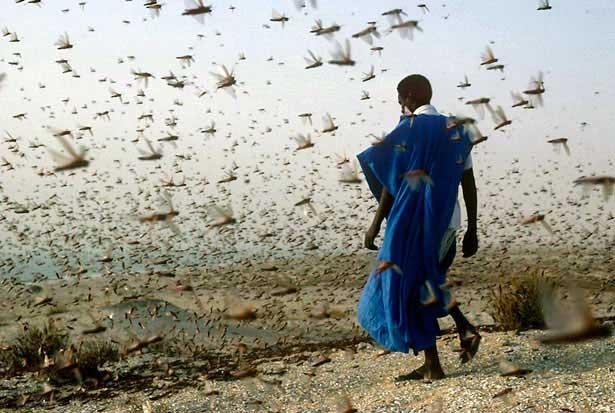 Footie-fetish group grope-locusts-swarm-615.jpg