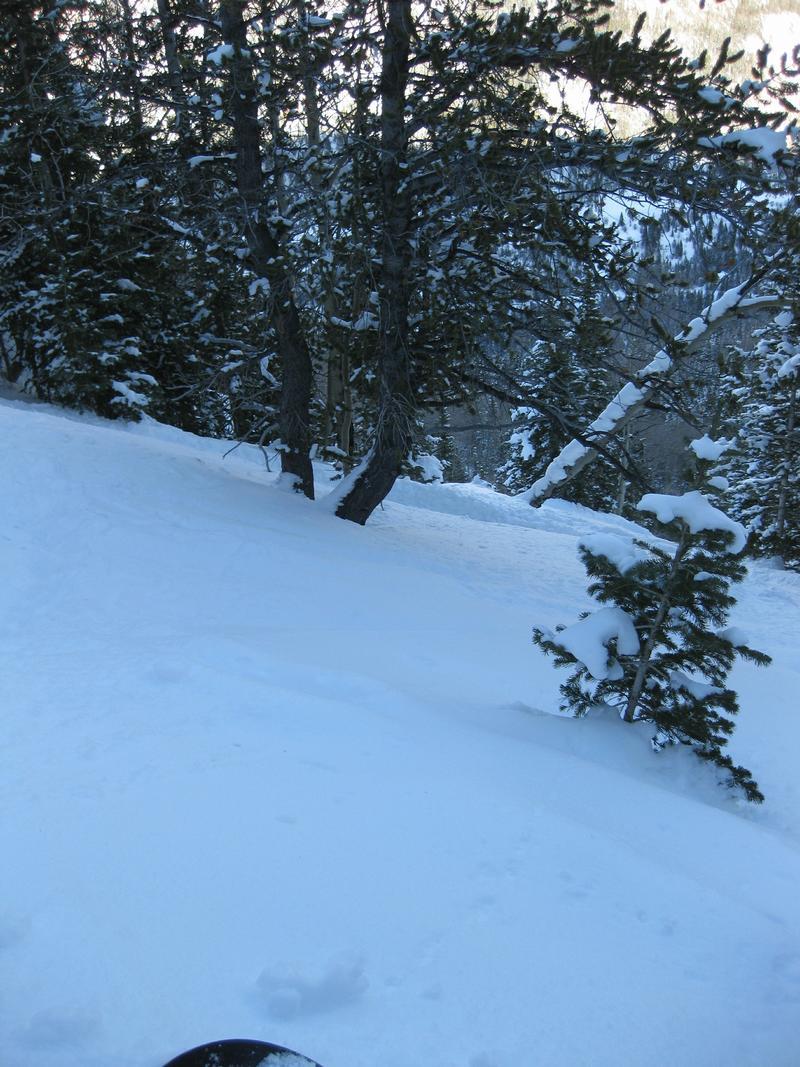 Ski or MTB?!?!  Tough Choices-longhorn.jpg