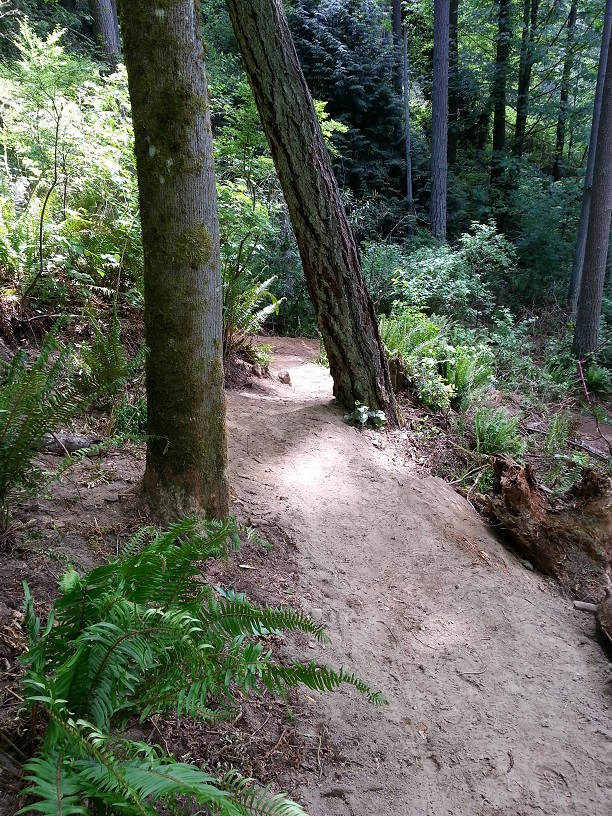 St. Edward State Park - Pipeline Trail Work Parties-looking-down-middle-switchback.jpg