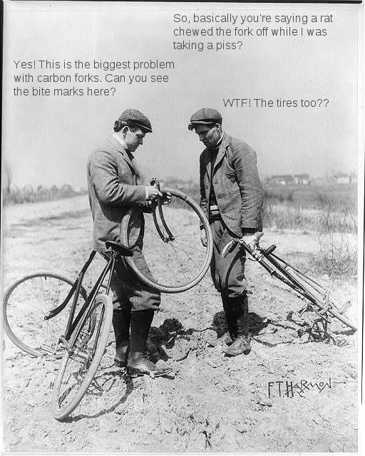 Looking for a Urban Bike-luciellewhatreallyhappened.jpg
