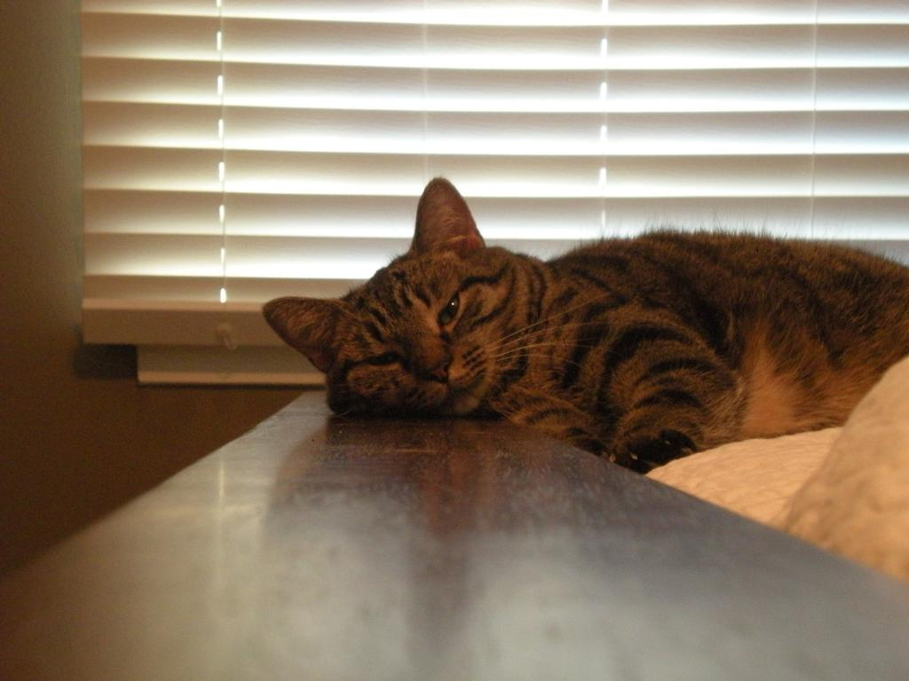 Cat Passion (here kittie, kittie, my new best friend...) Post your cat photos.-lucy3.jpg
