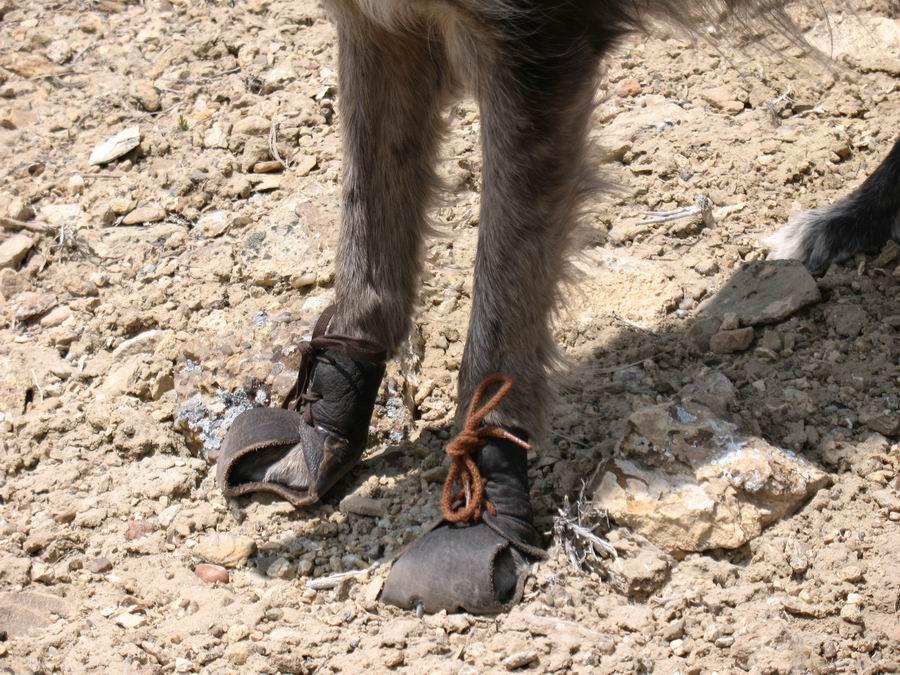 Good dog booties?-lula-dog-boots.jpg
