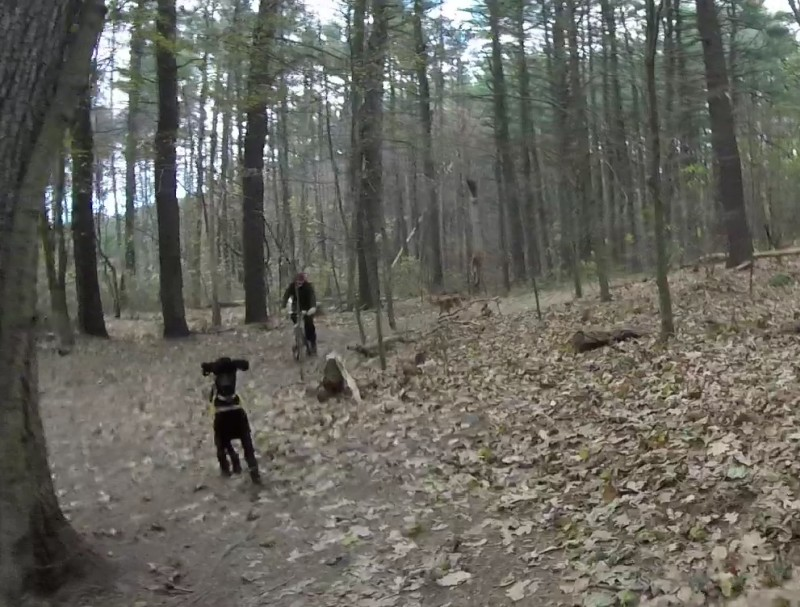 The Fells, off leash dogs increasingly common and dangerous-mad1.jpg