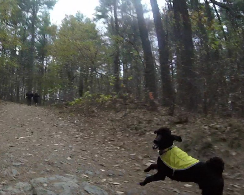 The Fells, off leash dogs increasingly common and dangerous-mad3.jpg