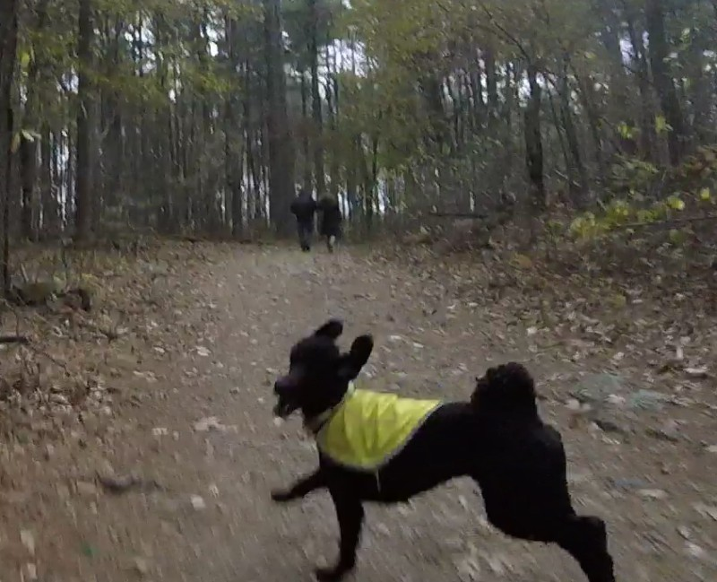 The Fells, off leash dogs increasingly common and dangerous-mad4.jpg