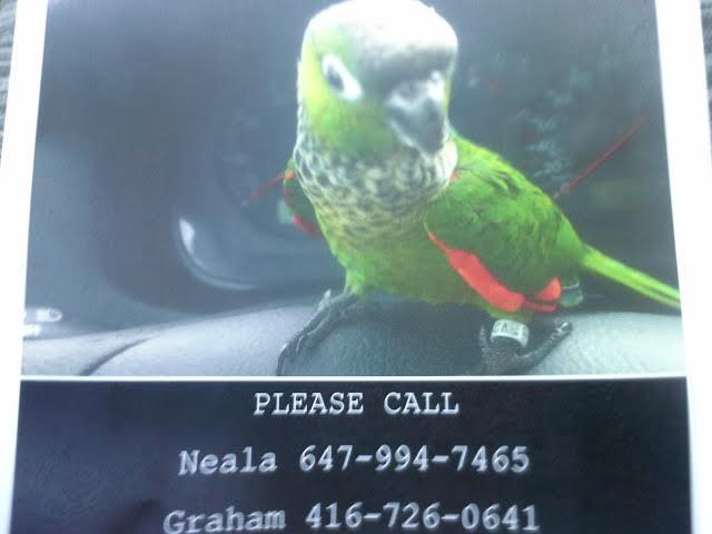 Lost bird in Palgrave / Allbion hills area-mail.google.com.jpg
