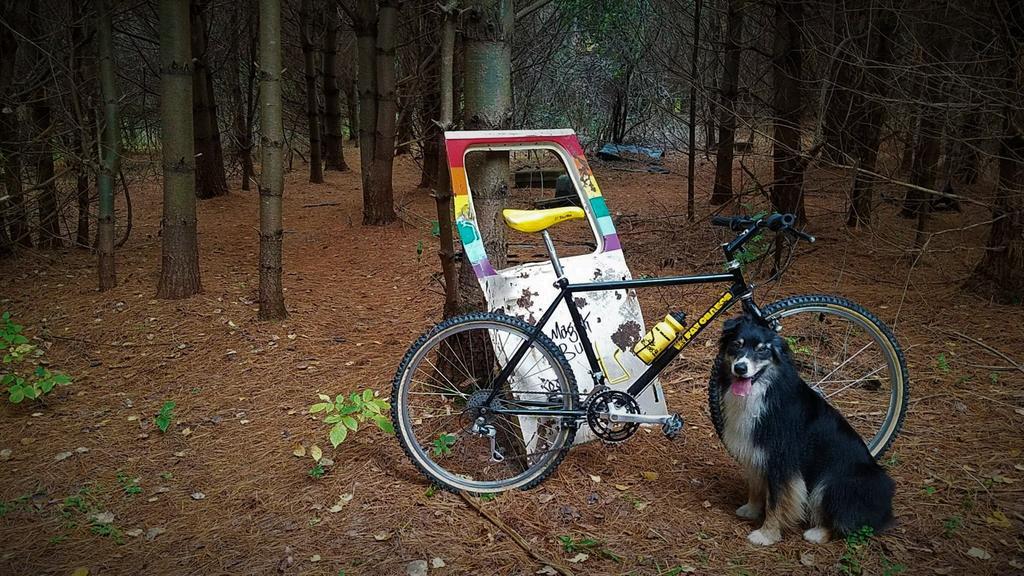 Trail Pics-majic-bus.jpg